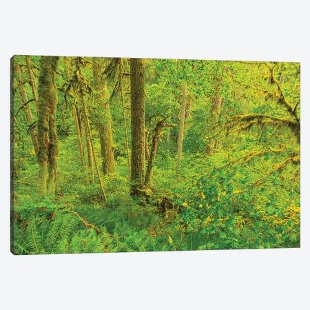 Trail of Ten Falls, Silver Falls State Park, near Silverton, Oregon Canvas Print #SWE96} by Stuart Westmorland Canvas Art