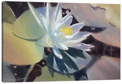 Light Lily Canvas Art Print