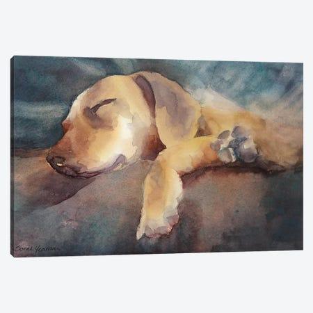 Colin Canvas Print #SYE7} by Sarah Yeoman Canvas Art Print