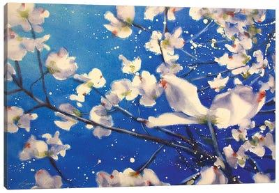 Dogwood And Wind Canvas Art Print
