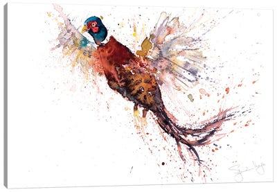 Pheasant V Pheasant Canvas Art Print