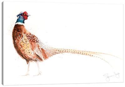 Pheasant X Canvas Art Print