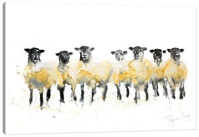 Sheep Row Of Sheep Canvas Art Print