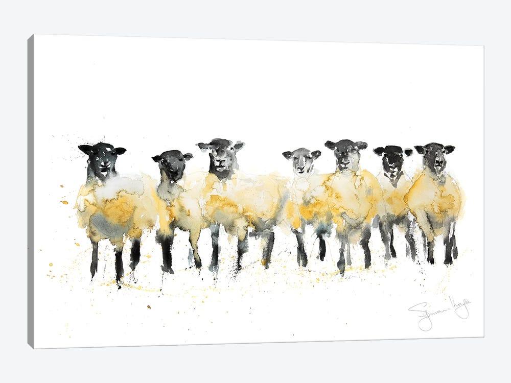Sheep Row Of Sheep by Syman Kaye 1-piece Canvas Art Print
