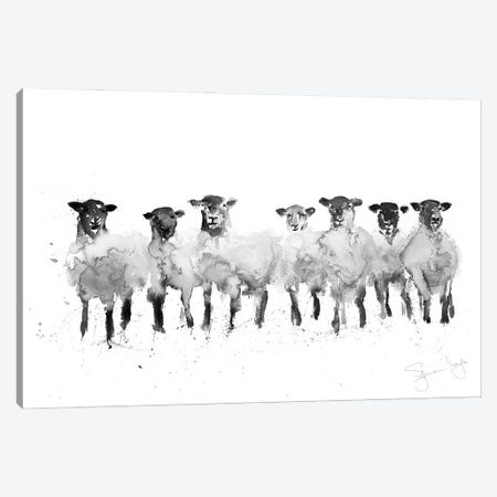 Sheep Row Of Sheep II Canvas Print #SYK145} by Syman Kaye Canvas Artwork