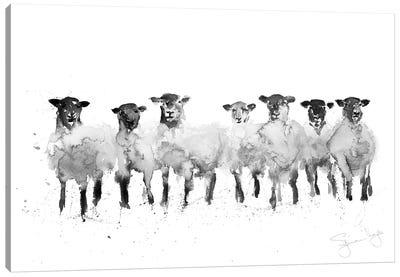 Sheep Row Of Sheep II Canvas Art Print