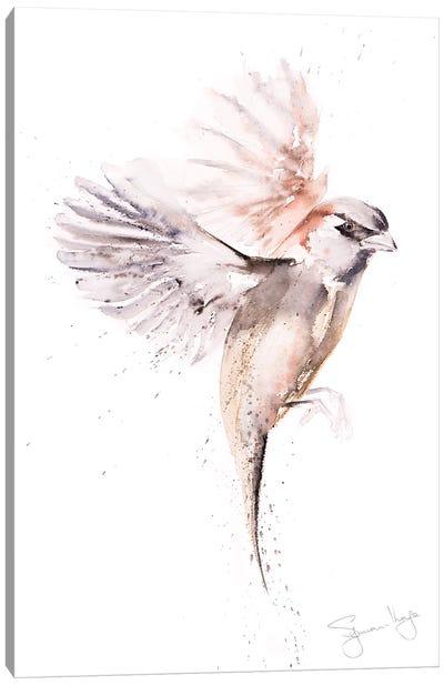Sparrow Just A Canvas Art Print
