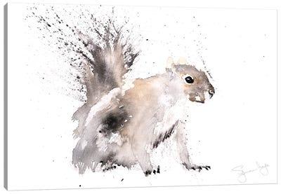 Squirrel Grey Squirrel Canvas Art Print