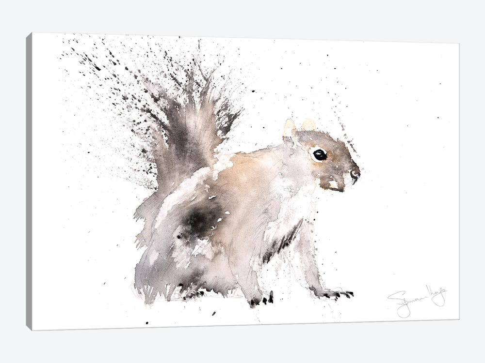 Squirrel Grey Squirrel by Syman Kaye 1-piece Canvas Print