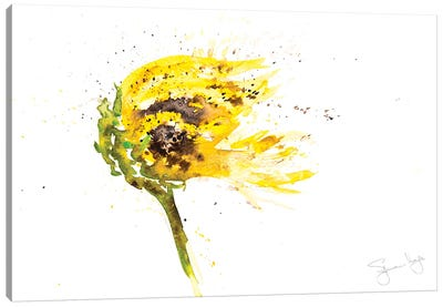 Sunflower Blowing Canvas Art Print