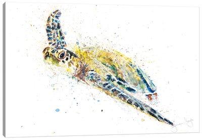 Turtle II Canvas Art Print