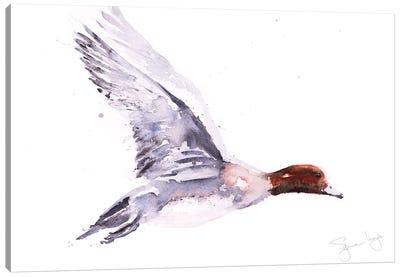 Wigeon In Flight Canvas Art Print