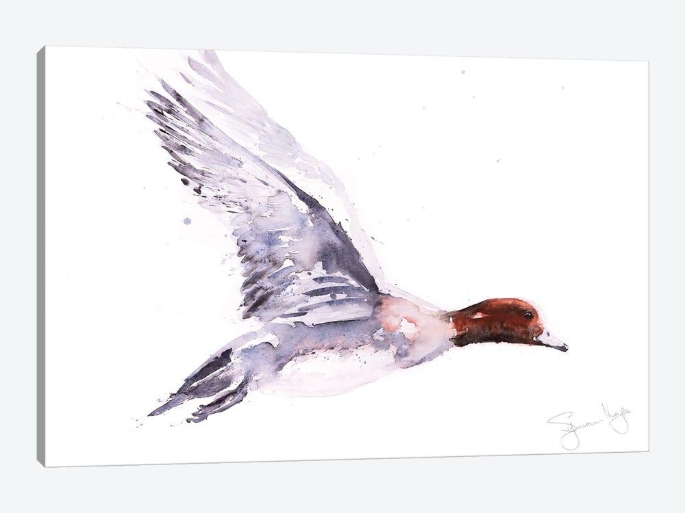 Wigeon In Flight by Syman Kaye 1-piece Canvas Art Print