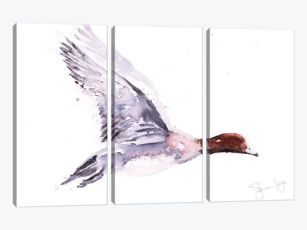 Wigeon In Flight by Syman Kaye 3-piece Canvas Print