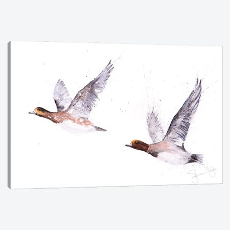 Wigeons In Flight Canvas Print #SYK174} by Syman Kaye Canvas Print