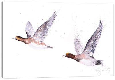 Wigeons In Flight Canvas Art Print