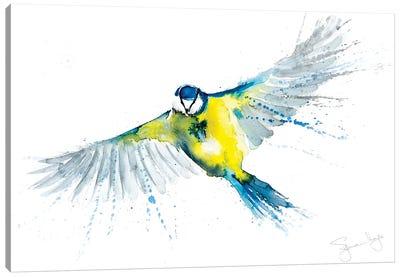 Blue Tit In Flight X Canvas Art Print