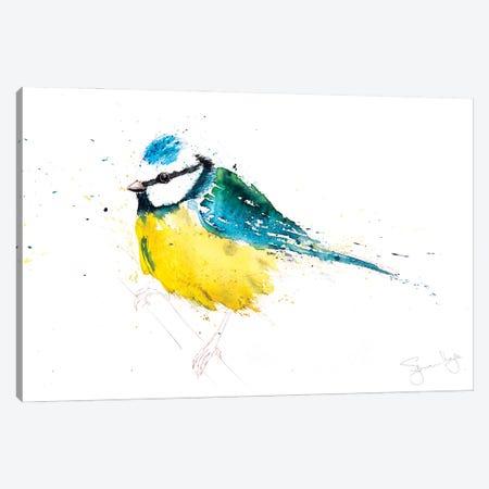 Blue Tit IX Canvas Print #SYK19} by Syman Kaye Canvas Wall Art