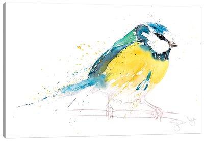 Blue Tit XI Canvas Art Print
