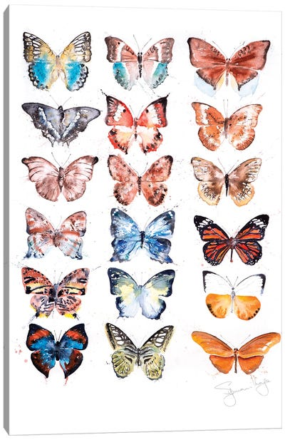 Butterfyly Collection I Canvas Art Print