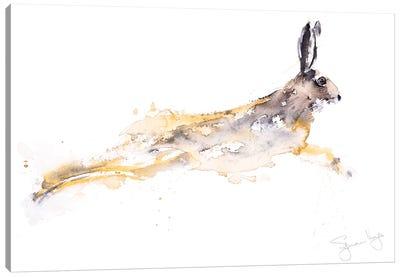 Chancer Hare Canvas Art Print