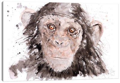 Chimp I Canvas Art Print
