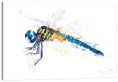 Flit Dragonfly Canvas Art Print