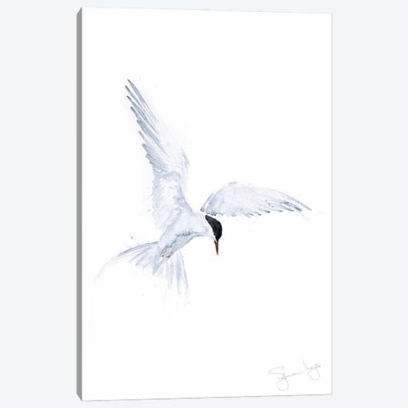 Flying Solo Arctic Tern Canvas Print #SYK49} by Syman Kaye Canvas Print