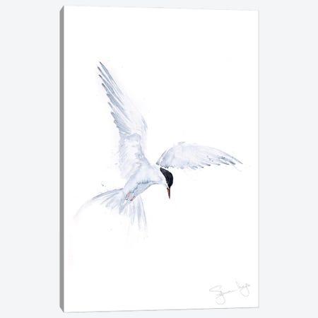 Flying Solo Arctic Tern Canvas Print #SYK49} by Syman Kaye Canvas Print