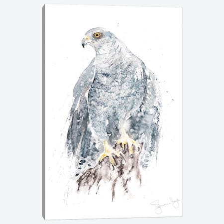 Goshawk I Canvas Print #SYK57} by Syman Kaye Canvas Art Print