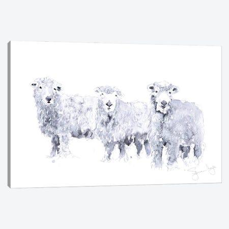 Grey Faced Dartmoor Sheep Canvas Print #SYK59} by Syman Kaye Canvas Artwork