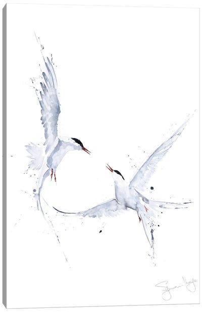 Arctic Angles Arctic Tern I Canvas Art Print