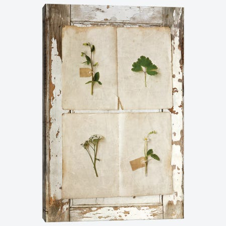 Botanical Board III Canvas Print #SYM11} by Symposium Design Canvas Art