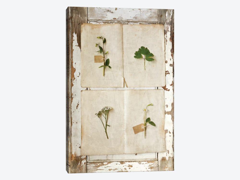 Botanical Board III by Symposium Design 1-piece Canvas Artwork