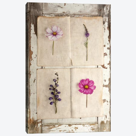 Botanical Board IV Canvas Print #SYM12} by Symposium Design Canvas Artwork