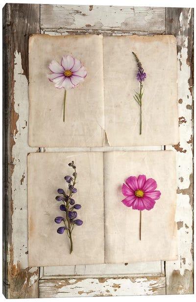 Botanical Board IV Canvas Art Print