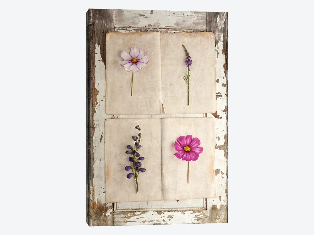 Botanical Board IV by Symposium Design 1-piece Canvas Print