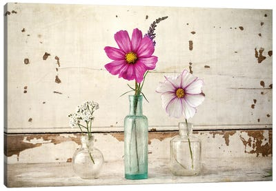 Cosmos Vases Canvas Art Print