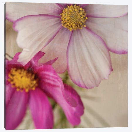 Cosmos I Canvas Print #SYM16} by Symposium Design Canvas Art Print