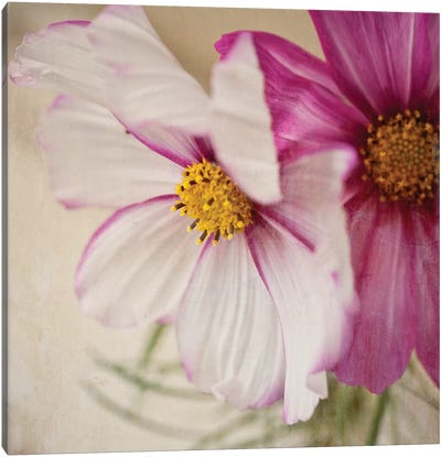 Two Cosmos Canvas Art Print