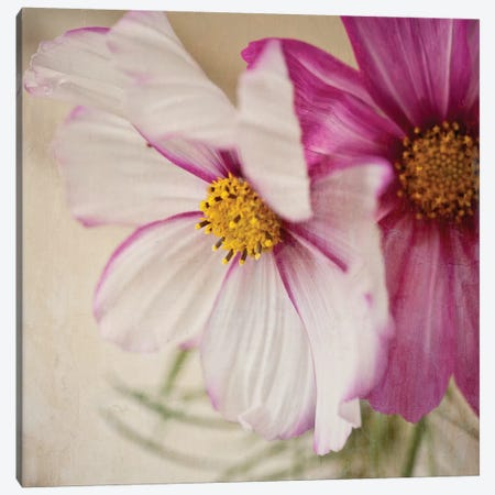 Two Cosmos Canvas Print #SYM1} by Symposium Design Canvas Artwork