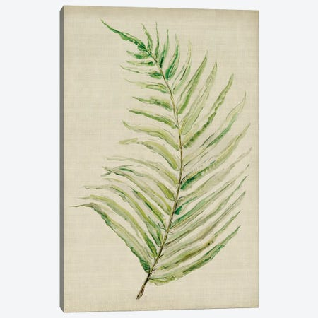 Fern I Canvas Print #SYM24} by Symposium Design Canvas Artwork