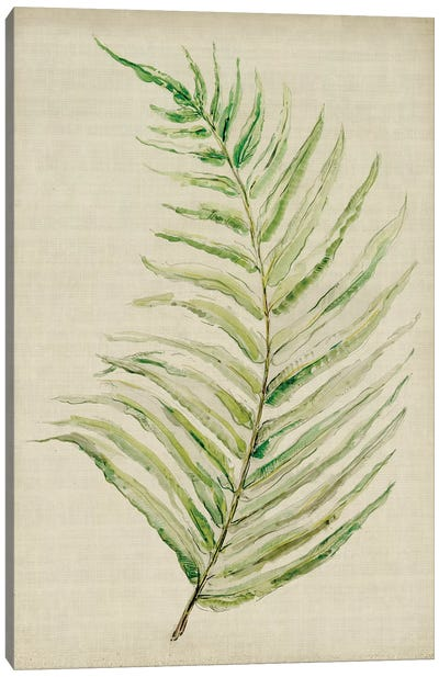 Fern I Canvas Art Print
