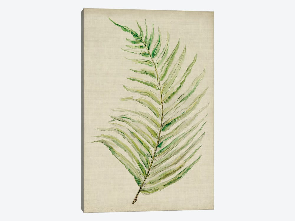 Fern I by Symposium Design 1-piece Canvas Artwork