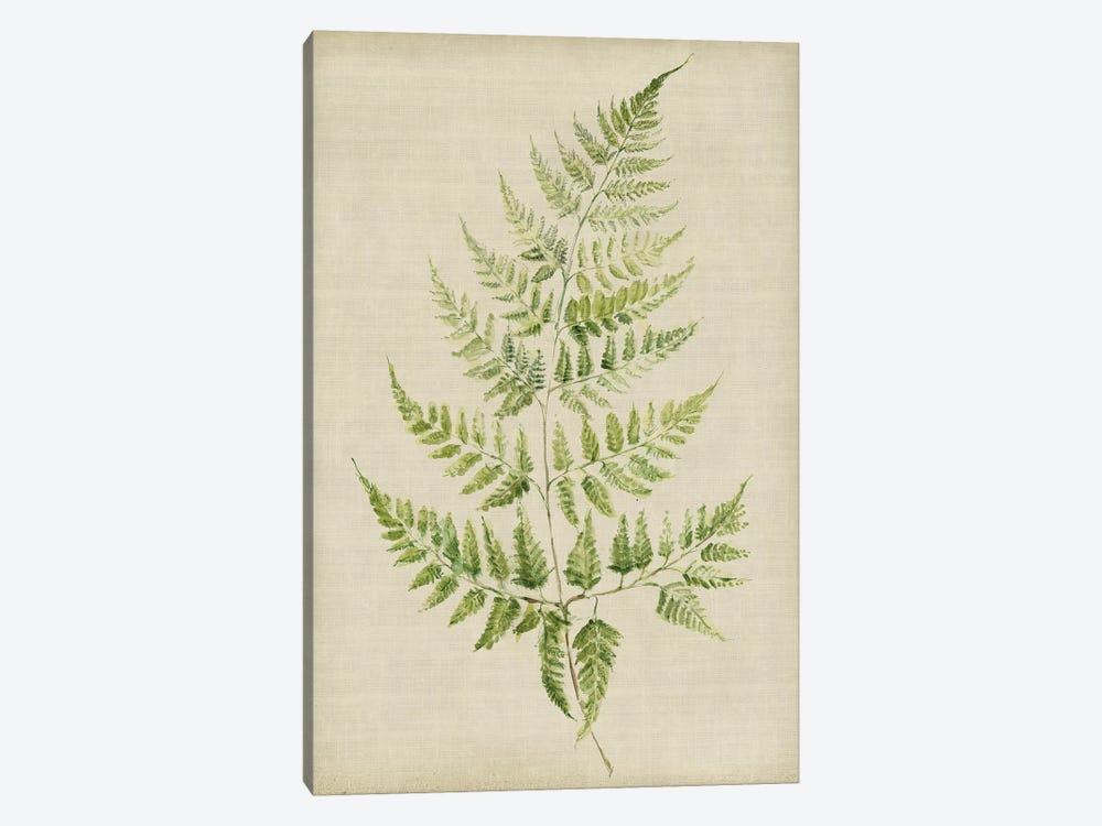 Fern II by Symposium Design 1-piece Art Print
