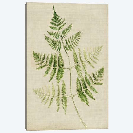 Fern IV Canvas Print #SYM26} by Symposium Design Canvas Art