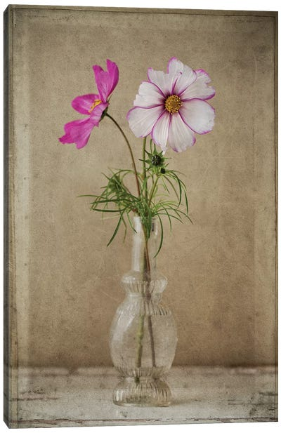 Two Cosmos Vase Canvas Art Print