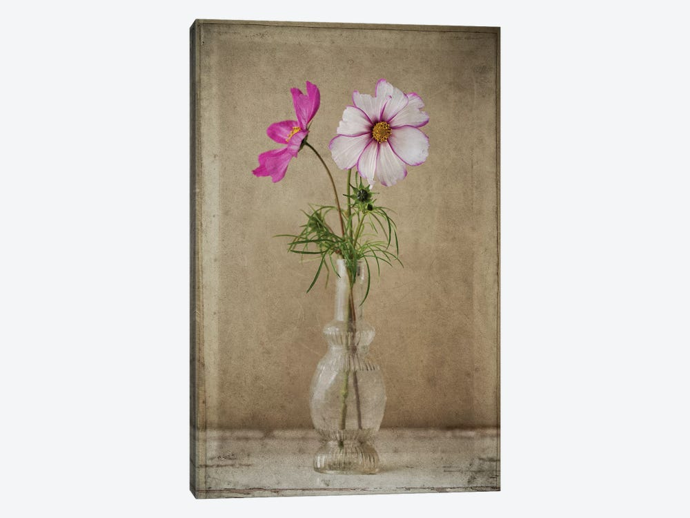 Two Cosmos Vase by Symposium Design 1-piece Canvas Art Print