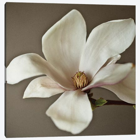 Magnolia 3-Piece Canvas #SYM35} by Symposium Design Canvas Art Print