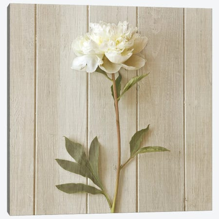 Peony Canvas Print #SYM36} by Symposium Design Canvas Print